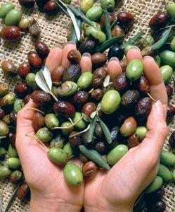 Оливковое масло защищает от рака