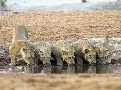 Корпорация BBC сокращает расходы на передачи о дикой природе