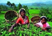 Россельхознадзор запретил ввоз в Россию растительную продукцию из Индии