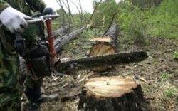 Москву вырубают под корень: после завершения выборов возобновлена массовая вырубка деревьев