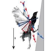 Найден новый ключ к появлению полёта у птиц