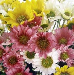 Алексей Гордеев призывает российских цветоводов увеличить производство цветов