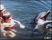 Ученые развенчали уникальность дельфинотерапии