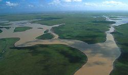 Бразилия остановит исчезновение лесов