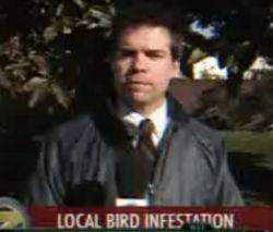 Почему журналисты не любят делать репортажи о птицах? (видео)