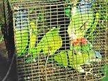 В Белоруссии почти триста контрабандных попугаев усыпили и сожгли