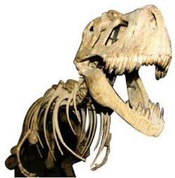 Christie\'s выставляет на торги скелет динозавра