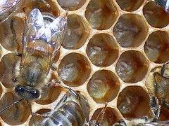 Чешские пчеловоды получили письмо, отправленное в 1914 году