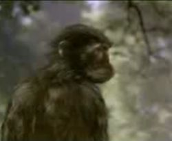 Эволюция за 5 минут (видео)