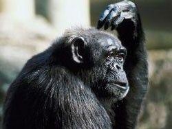 Шимпанзе из фильма о Тарзане готовится издать свои мемуары
