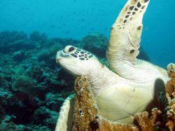 Бангладешские экологи жертвуют принципами ради спасения редких черепах