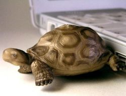 Флешки Minimoo в виде животных (фото)
