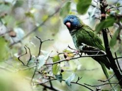 В Германии успешно прижились и нашли свою экологическую нишу попугаи
