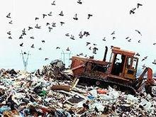 Ситуация с мусором в Подмосковье близка к неаполитанской