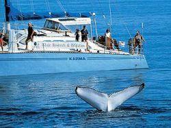 За миграцией китов будет следить летающий робот