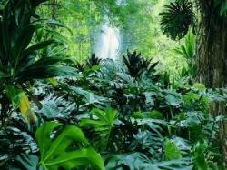 В Латинской Америке и Карибском бассейне ежегодно исчезают 4,7 млн га лесов