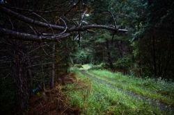 Леса Новой Зеландии (фото)