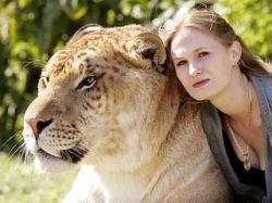 Лигр - самая крупная кошка в мире (фото)