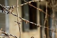 Владимир Жириновский выступил за амнистию заключенных