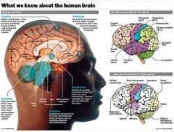 Ученые нашли способ восстановить память