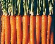 Пользователи Интернета планируют массовую скупку моркови