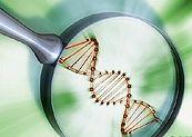 Создается искусственный генный алфавит