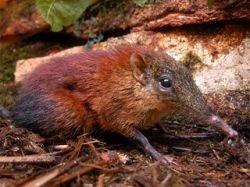 В Танзании найден неизвестный науке зверь (фото)