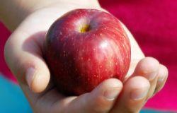 Яблоки, бананы и апельсины – лучшие фрукты для борьбы с болезнью Альцгеймера