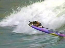 В Южной Америке осваивают серфинг с животными