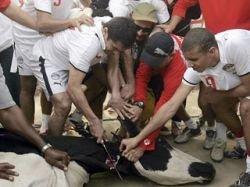 Египетские футболисты убили корову прямо на тренировке