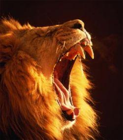 На КПП у палестинца изъяли... льва