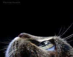 Плодородный Полумесяц — родина домашних кошек