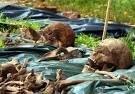 В Воронеже под гаражом нашли забытую братскую могилу