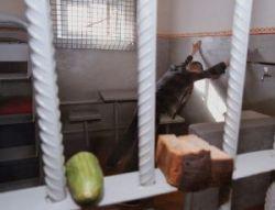 Заключенные винницкой колонии объявили голодовку