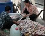 В Индонезии запустили первый в мире трехгодовой план по борьбе с птичьим гриппом