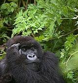18 фактов о тропических лесах