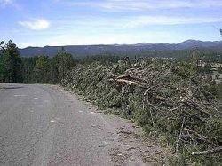 Из лесных отходов будут производить биотопливо