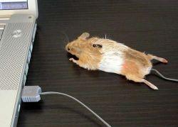 Дизайнеры придумали пластилиновую компьютерную мышь