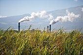 Загрязнение воздуха влияет на сперму