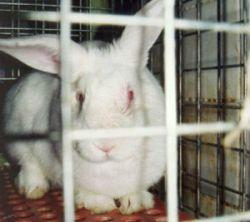 Впервые московский ВУЗ отказывается от проведения опытов на животных