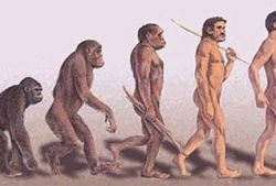 Ученые обнаружили доказательства продолжающейся эволюции человека