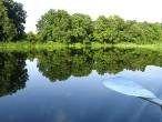 В одной из самых чистых рек Европы гибнет рыба