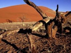Ученые определили районы планеты, подвергающиеся наибольшему риску из-за глобального потепления