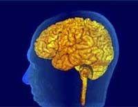 Медики: болевые ощущения очень вредны для мозга