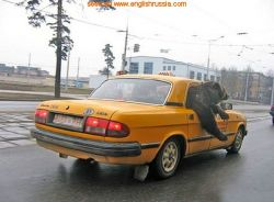 На российских дорогах медведи штурмуют автомобили? (видео)