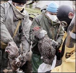 В Украине зафиксирован вирус птичьего гиппа