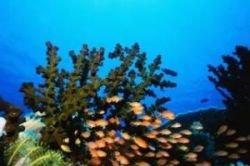 Бороться с загрязнением арктических морей нефтепродуктами будут водорослевые биофильтры