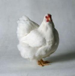 Птица не согласилась стать едой для китайца
