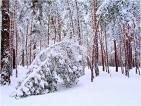 В Китае снегопады повредили 17 млн гектаров леса