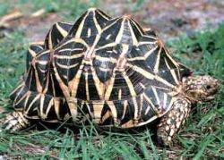 Гигантских галапагосских черепах выпустили в места обитания туристов